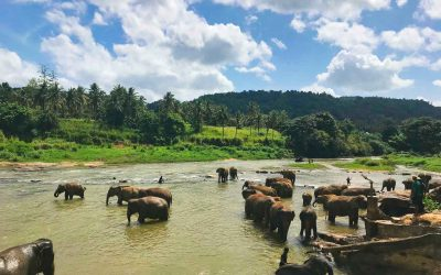 Elefantenwaisenhaus Pinnawela