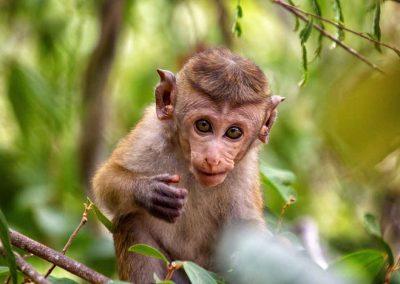 Land-und-Leute-Nationalparks-Bundala-National-Park-Srilankareisen-1