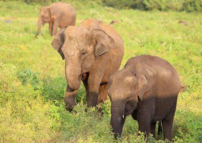 Land-und-Leute-Nationalparks-Bundala-National-Park-Srilankareisen-2