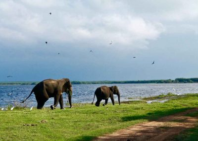 Land-und-Leute-Nationalparks-Bundala-National-Park-Srilankareisen-4