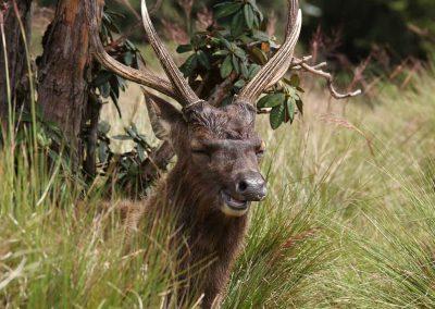 Land-und-Leute-Nationalparks-Horton-Plains-Srilankareisen-3