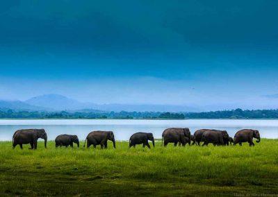 Land-und-Leute-Nationalparks-Minneriya-National-Park-Srilankareisen-1