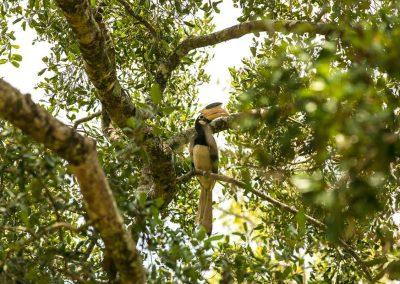 Land-und-Leute-Nationalparks-Minneriya-National-Park-Srilankareisen-4
