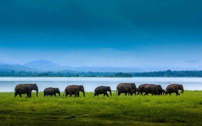 Udawalawa Nationalpark